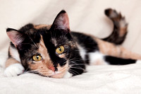 Portrait of a cat at an animal shelter by pet photographer Mandy Schoch, Los Angeles, California